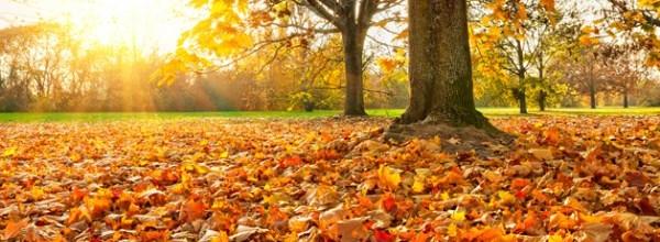 la-vem-o-outono